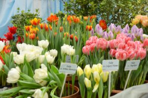 DREAMING OF SPRING EXHIBITION